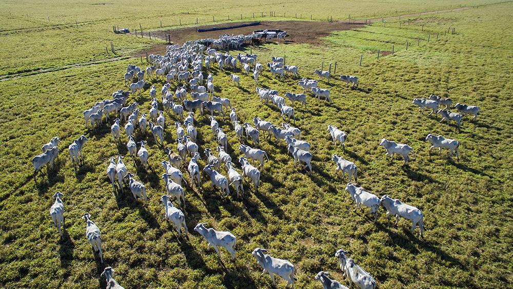 5 motivos para usar drones no agronegócio