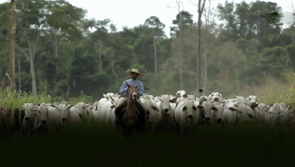 Pecuária, uma atividade sustentável