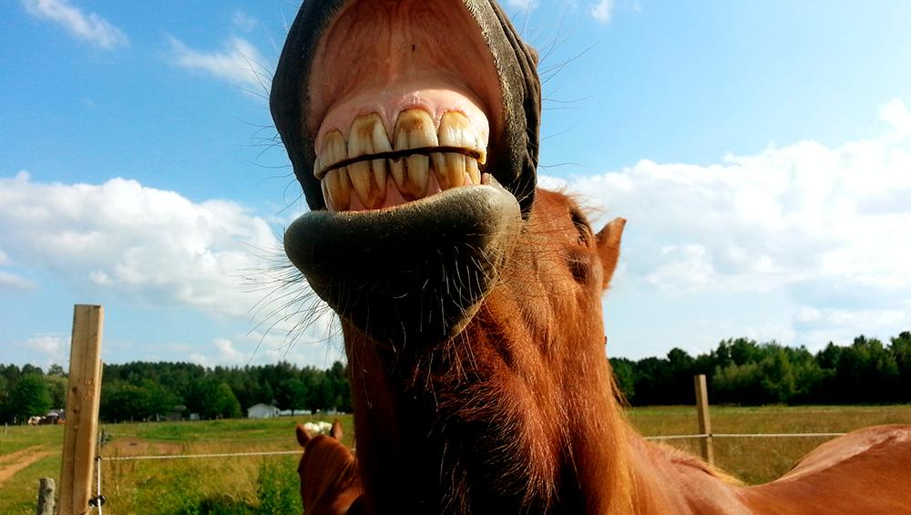 4 problemas mais comuns com a dentição do cavalo