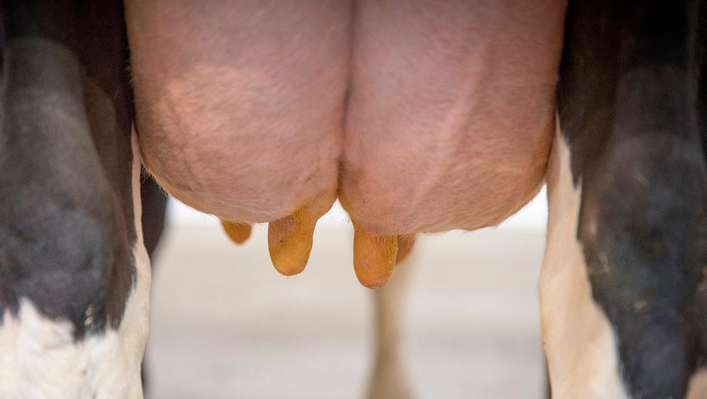 Mastite: 5 dicas fundamentais para evitar prejuízos