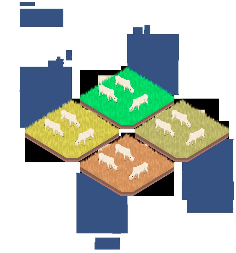 Ciclo de transição da pecuária