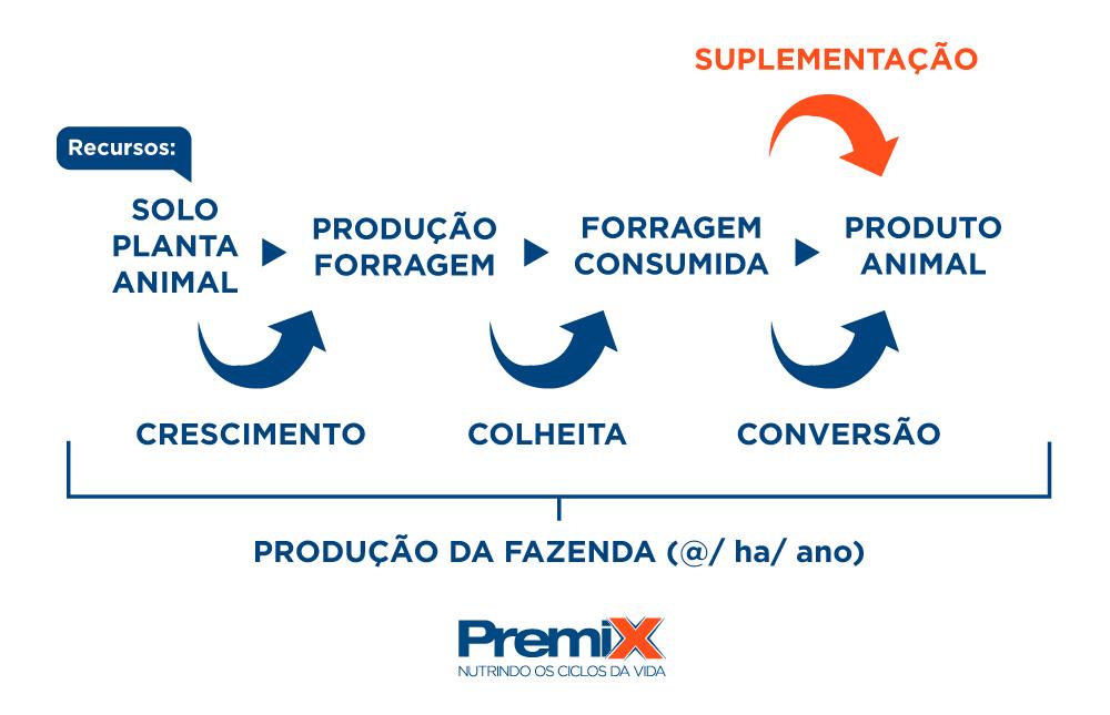 Eficiência do processo de produção e utilização da forragem