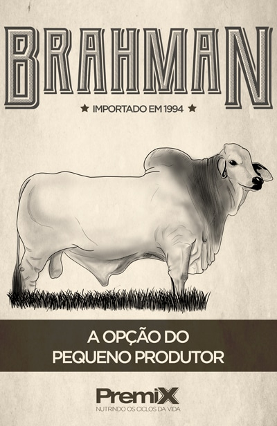 Brahman o gado bem adaptado
