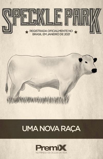 Speckle Park: A raça recém-chegada no Brasil
