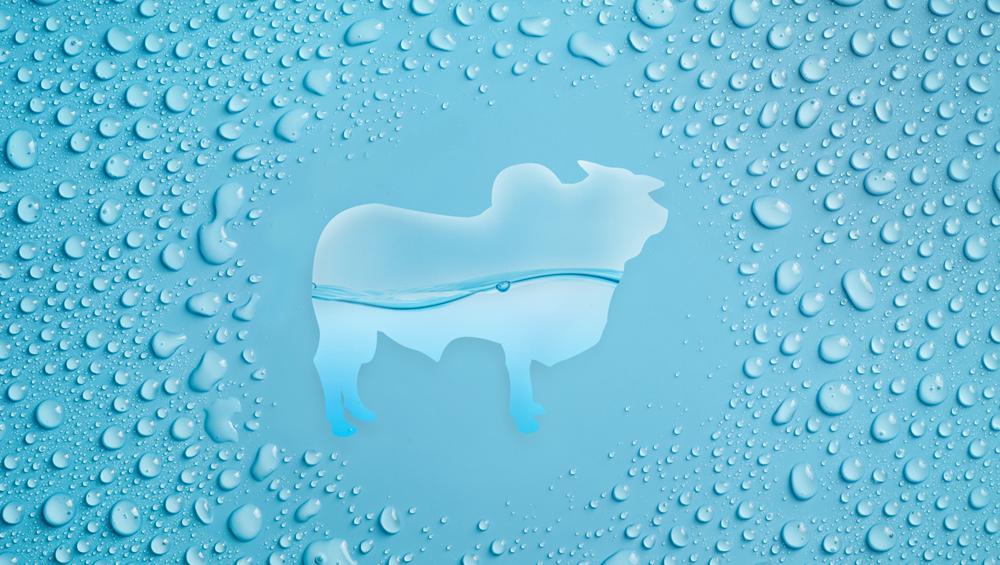 Água virtual no agronegócio: a água que você não vê!