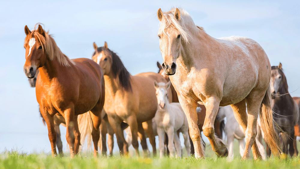 Raças de cavalo no Brasil, quais as principais?