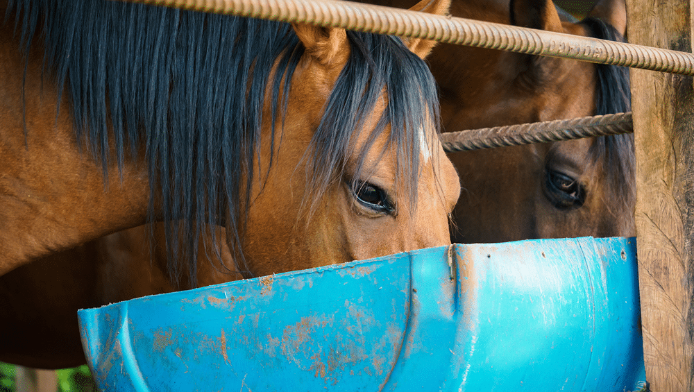 Alie a nutrição de equinos a resultados