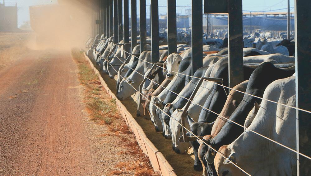 O que é bovinocultura?